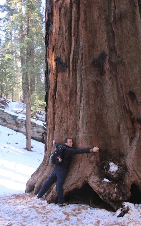 sequoia_portada
