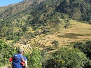 arrozales en la ruta de los Annapurnas