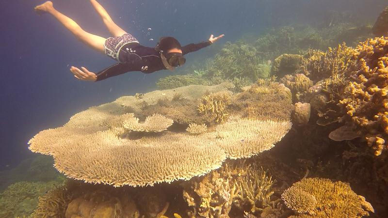 corales enormes