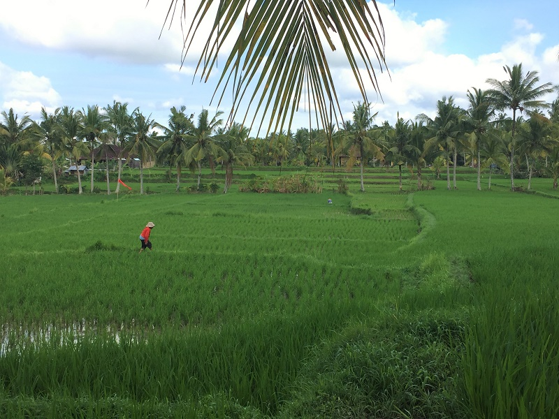 terrazas arroz Bali
