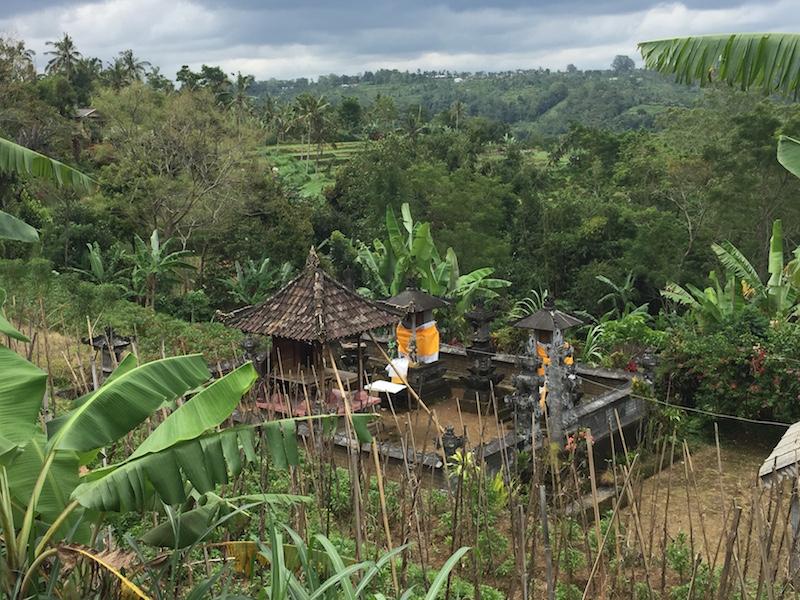 terrazas de arroz en Bali