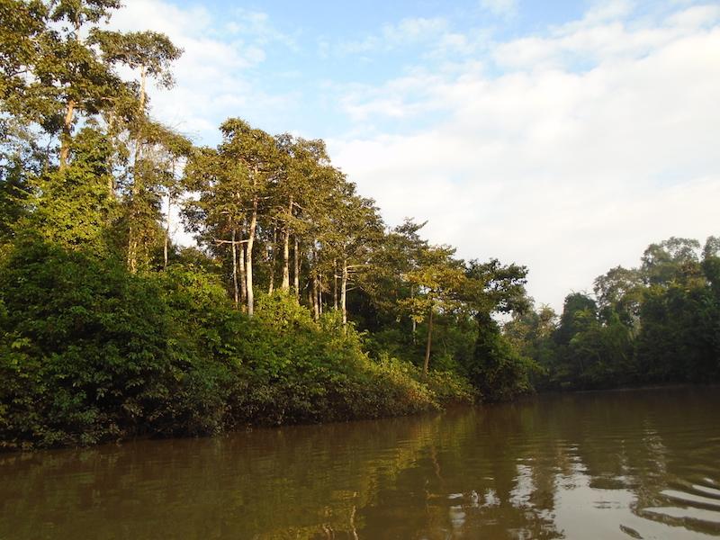 navegando por el río Kinabatangan