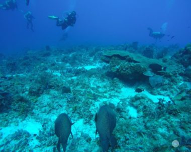 Los mejores arrecifes de Playa del Carmen donde bucear
